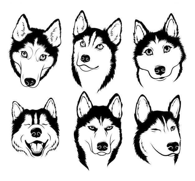 Conjunto de husky. coleção de cães com pedigree. ilustração a preto e branco de um cão husky.