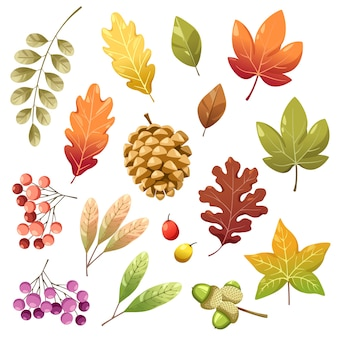 Conjunto de ícones com bagas, nozes, folhas e pinhas secas