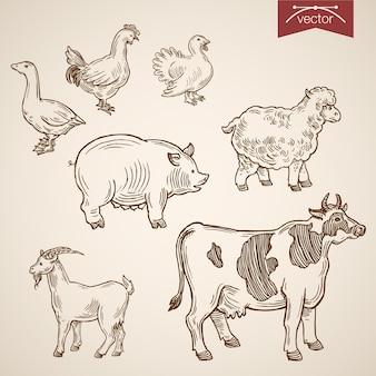 Conjunto de ícones de animais engraçados amigável de fazenda doméstica.