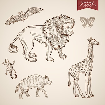 Conjunto de ícones de animais engraçados amigável de zoológico de vida selvagem.