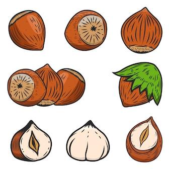 Conjunto de ícones de avelãs em fundo branco. elementos para o logotipo, etiqueta, emblema, sinal, cartaz. ilustração.