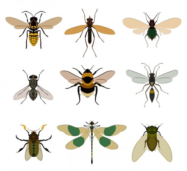 Conjunto de ícones de bug isolado no branco