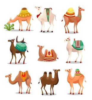Conjunto de ícones de camelo. ilustração em estilo cartoon plana