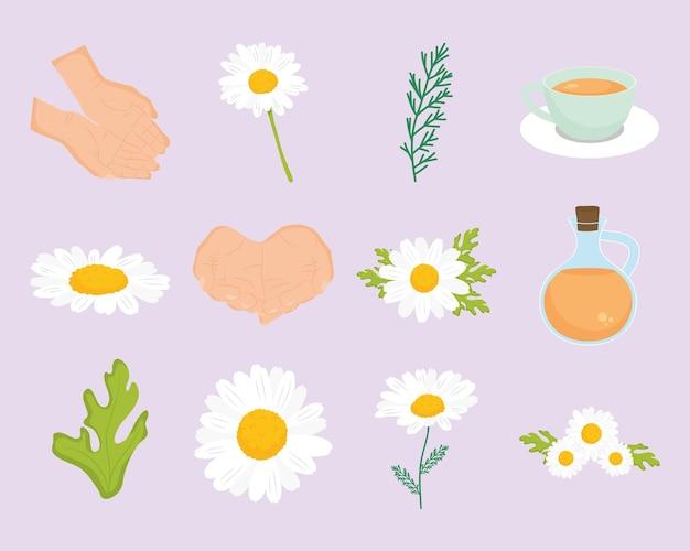 Conjunto de ícones de camomila e flores