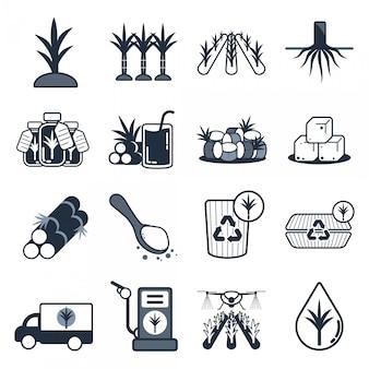 Conjunto de ícones de cana de açúcar