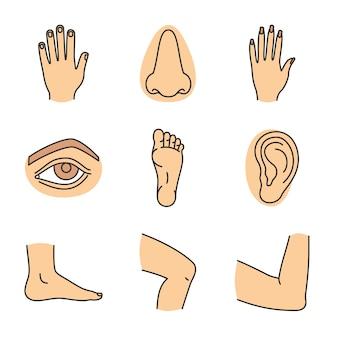 Conjunto de ícones de cores de partes do corpo humano