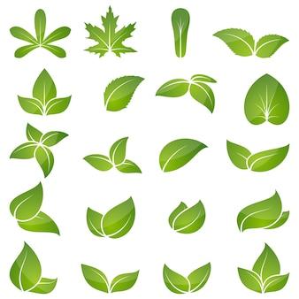 Conjunto de ícones de folha verde