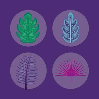 Conjunto de ícones de folhas tropicais