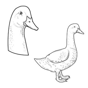 Conjunto de ícones de ganso no fundo branco. elementos para o logotipo, etiqueta, emblema, sinal, cartaz.