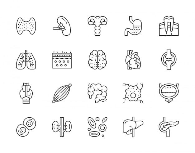 Conjunto de ícones de linha de órgãos humanos.