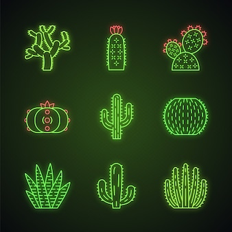 Conjunto de ícones de luz neon de cactos selvagens