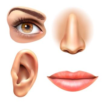 Conjunto de ícones de nariz de lábios de orelha de olho