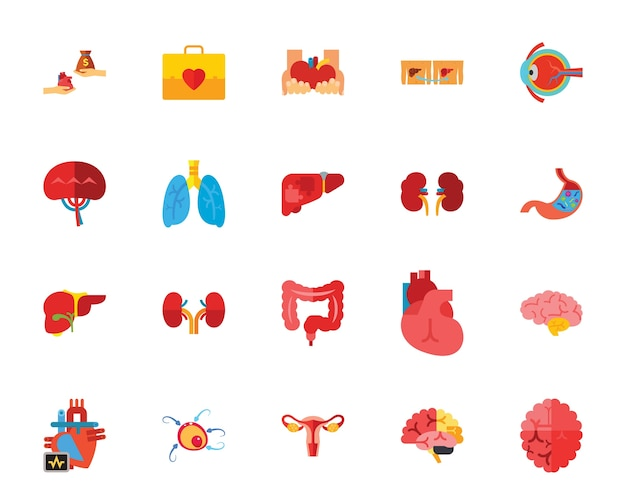 Conjunto de ícones de órgãos humanos