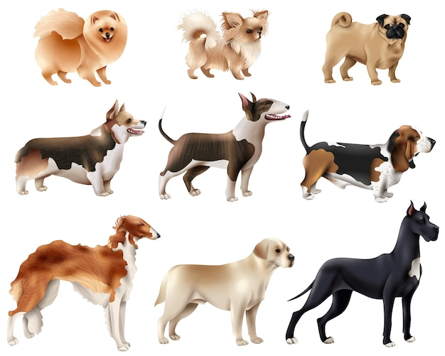 Conjunto de ícones de raças de cães