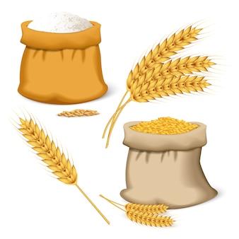 Conjunto de ícones de trigo de cevada