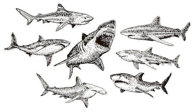 Conjunto de ícones de tubarão desenhado de mão de tinta