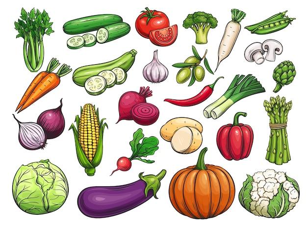 Conjunto de ícones de vegetais desenhados à mão