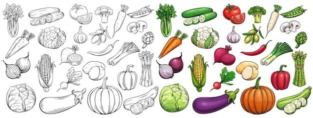 Conjunto de ícones de vegetais desenhados.