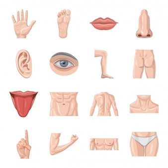 Conjunto de ícones do corpo humano dos desenhos animados.