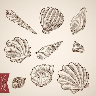 Conjunto de ícones do mundo subaquático vida marinha oceano.