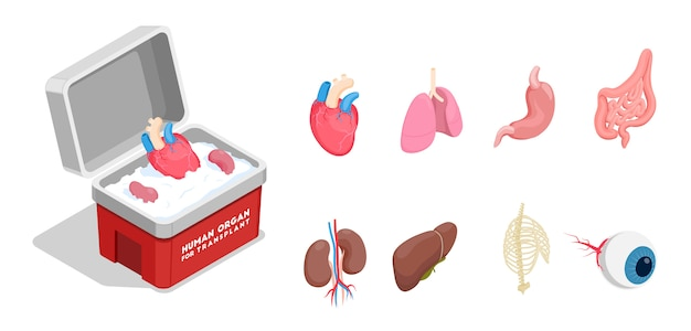 Conjunto de ícones isométricos com diferentes órgãos humanos doadores para transplante, isolado no fundo branco 3d
