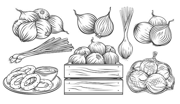 Conjunto de ícones monocromáticos de contorno de cebola desenhada.