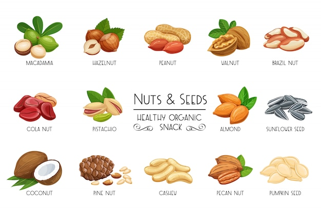 Conjunto de ícones nozes e sementes.