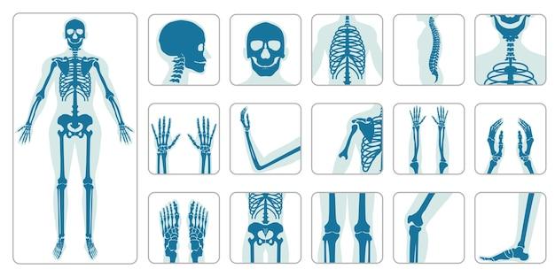 Conjunto de ícones ortopédicos e esqueleto de ossos humanos