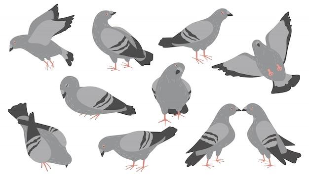 Conjunto de ícones planos de pombos de desenho animado