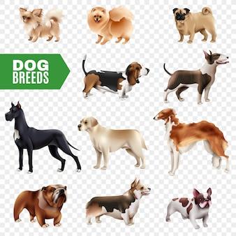 Conjunto de ícones transparentes de raças de cães