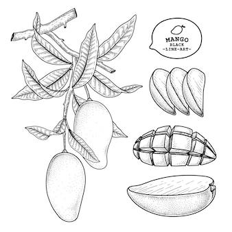 Conjunto de ilustração botânica de elementos desenhados à mão de fruta de manga