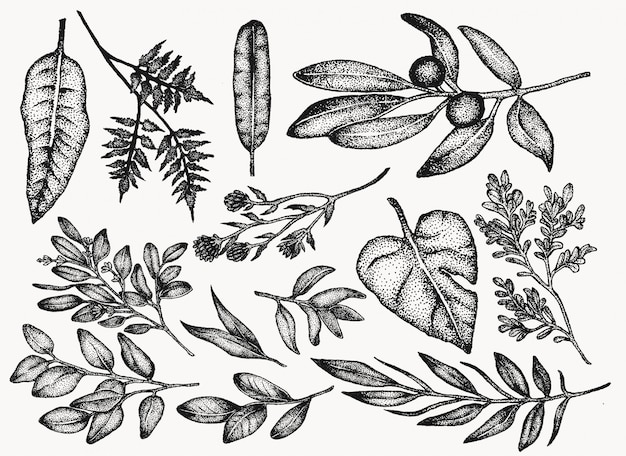 Conjunto de ilustração botânica vintage de plantas e flores