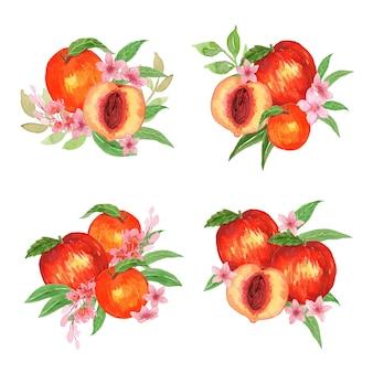 Conjunto de ilustração de arranjo de frutas de pêssego em aquarela