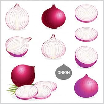 Conjunto de ilustração de cebola roxa ou vermelha
