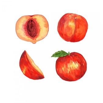Conjunto de ilustração de clipart de fruta pêssego em aquarela