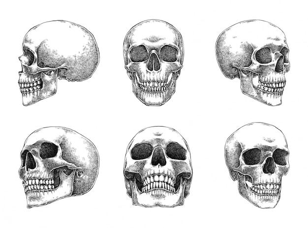 Conjunto de ilustração de crânios