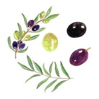 Conjunto de ilustração de fruta verde-oliva em aquarela
