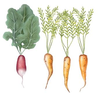 Conjunto de ilustração de lápis fofo de legumes
