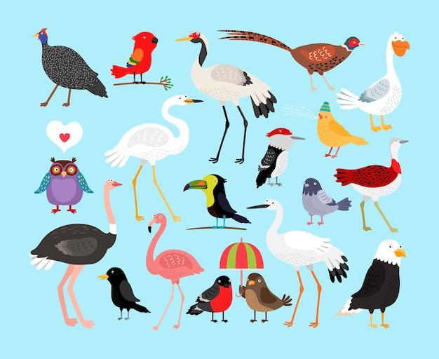 Conjunto de ilustração de pássaros bonitos