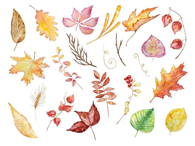 Conjunto de ilustração em aquarela de outono amarelo laranja e folhas rosa e ramos de diferentes formas e physalis