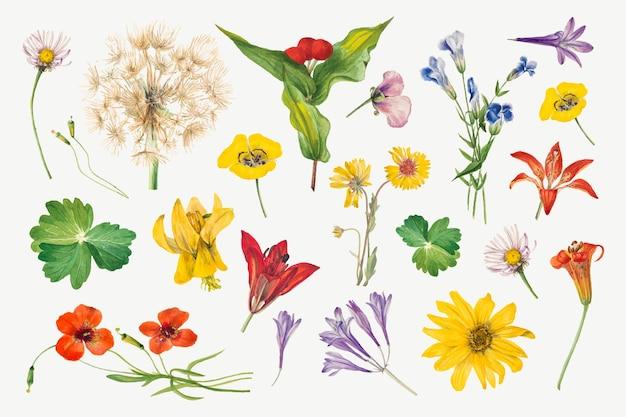 Conjunto de ilustração floral florescendo colorido, remixado das obras de mary vaux walcott
