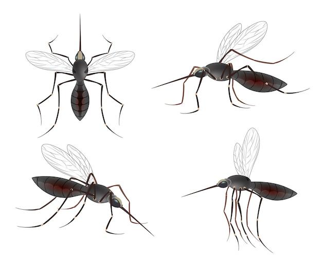 Conjunto de ilustração realista de mosquitos