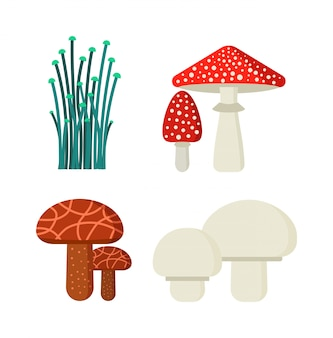 Conjunto de ilustração vetorial de cogumelos tipos diferentes isolados