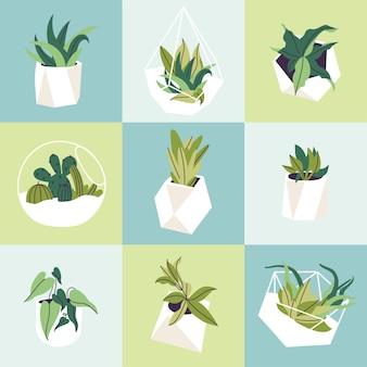 Conjunto de ilustração vetorial de florários de vidro e vasos de concreto com plantas. vários tipos de suculentas, cactos e folhas tropicais. padrão uniforme.