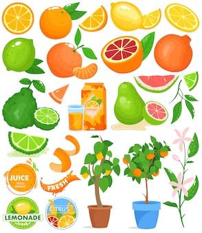 Conjunto de ilustração vetorial de frutas cítricas.