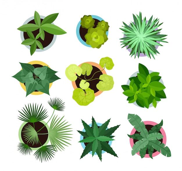 Conjunto de ilustração vetorial de plantas diferentes em vasos coleção de vista superior de plantas, cactos em estilo cartoon plana