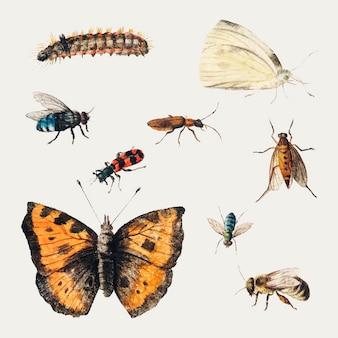 Conjunto de ilustração vintage de borboletas e insetos