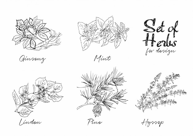 Conjunto de ilustrações botânicas