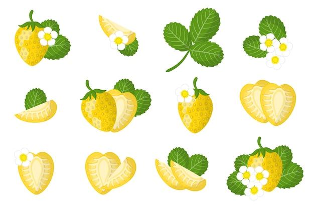 Conjunto de ilustrações com frutas exóticas de morango amarelo, flores e folhas isoladas