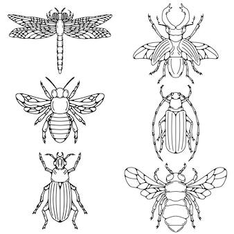 Conjunto de ilustrações de besouro no fundo branco.